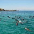 Playful-Seals