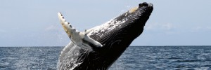 sheriff-whale